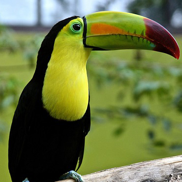 toucan-img